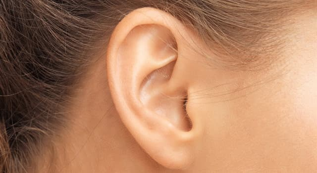 Science Trivia Question: Which of these is external to the oval window of the inner ear?