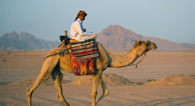 Society Trivia Question: Which of these terms is generally applied to Arab nomads?