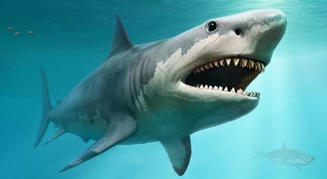 Natur Wissensfrage: Wie atmen Haie?
