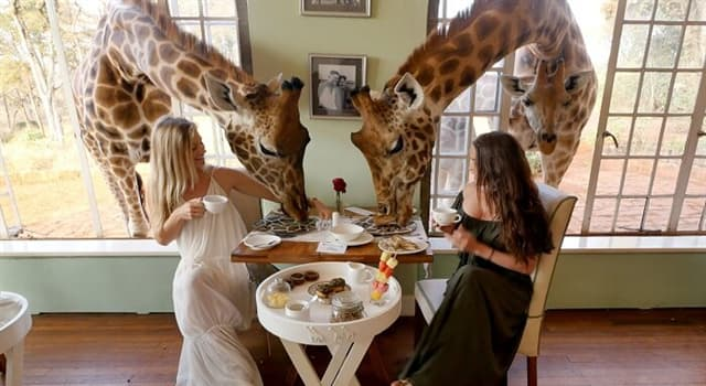 Natur Wissensfrage: Wo leben Giraffen?