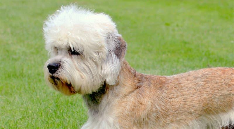 Природа Вопрос: Как называется эта порода собак?