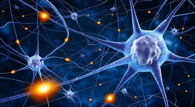Science Trivia Question: Nerve cells are also known as what?