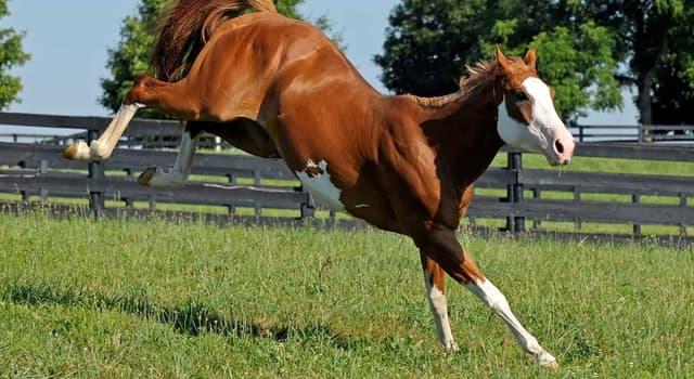 Natur Wissensfrage: Was ist die natürliche Nahrung für Pferde?