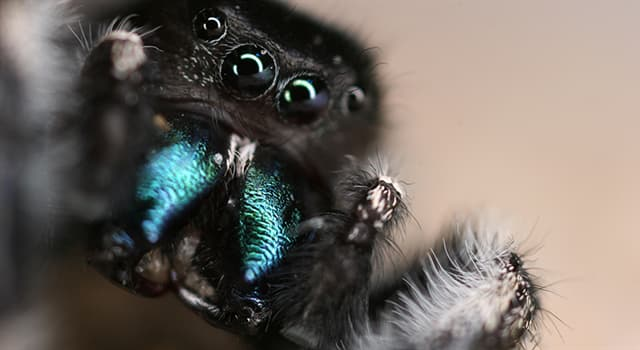 Natur Wissensfrage: Welche dieser Spinnen hat keine Atemwege?