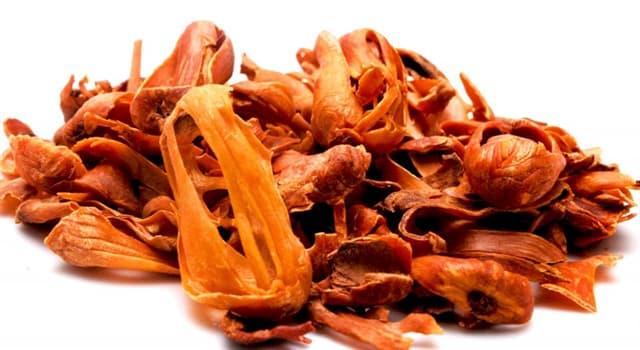 Natur Wissensfrage: Welcher Baumsamen wird für die Herstellung des Gewürzes Muskat verwendet?
