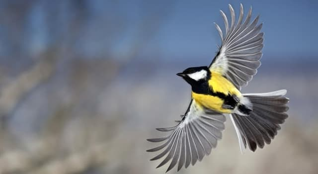 Nature Trivia Question: What is a regular seasonal movement of birds, often from north to south called?