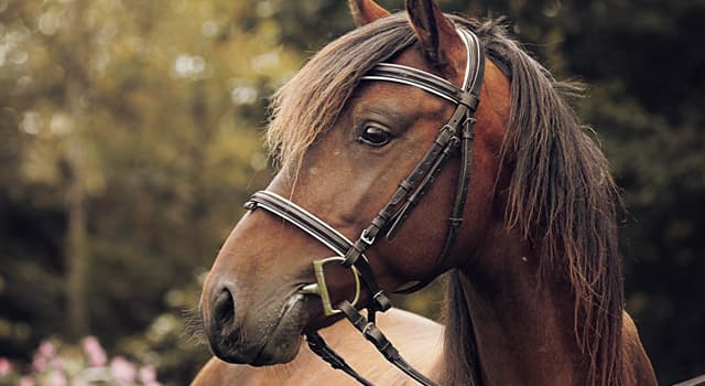 Culture Trivia Question: What is the name for equipment or accessories equipped on horses?