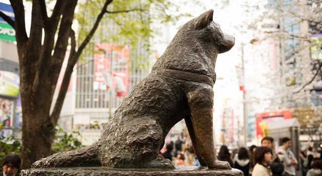 History Trivia Question: What was the name of a famous Japanese Akita dog remembered for his remarkable loyalty to his owner?