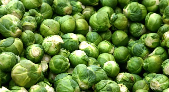 Nature Trivia Question: Where did the Brussels sprout originate?