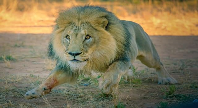 """History Trivia Question: Where is the """"Lion Sermon"""" delivered annually?"""