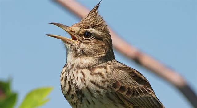 Nature Trivia Question: Which bird is pictured below?