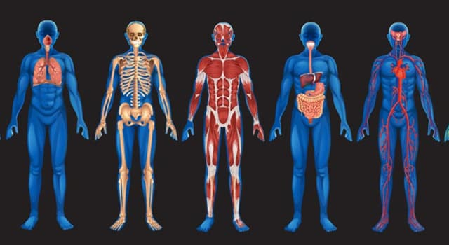 Science Trivia Question: Which bodily process is mastication?
