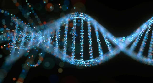 Science Trivia Question: Which chromosome determines the female gender?