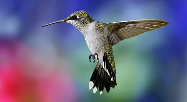 Nature Trivia Question: Which of these do hummingbirds eat?