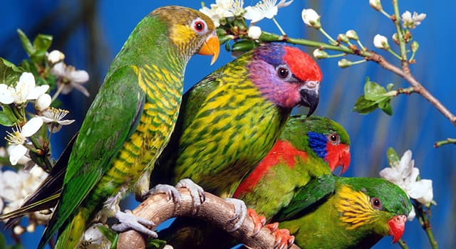 Nature Trivia Question: Which of these facts about parrots is false?