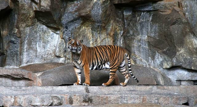 Society Trivia Question: Which of these zoos is the largest in Europe in terms of territory?