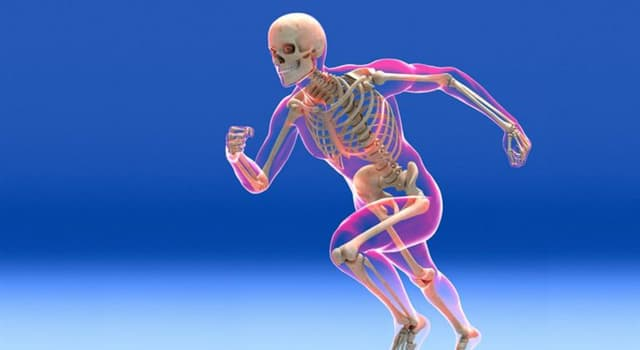 Science Trivia Question: In anatomy, what is the acromion?
