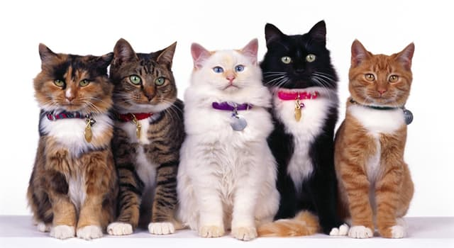 Culture Trivia Question: In Western history, which cats have typically been looked upon as a symbol of evil omens?