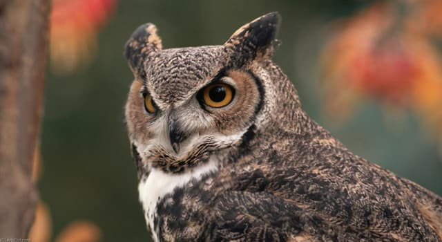 Nature Trivia Question: What time of day do most owls hunt?