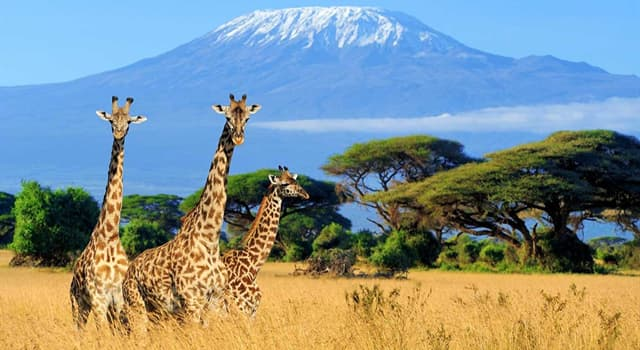 Geography Trivia Question: Which city is the capital of Kenya?