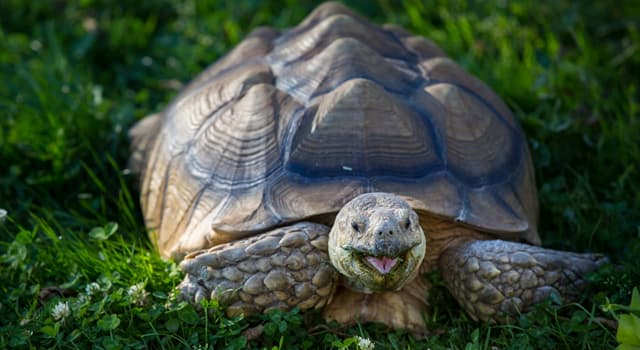 Nature Trivia Question: Which fact about turtles is not correct?