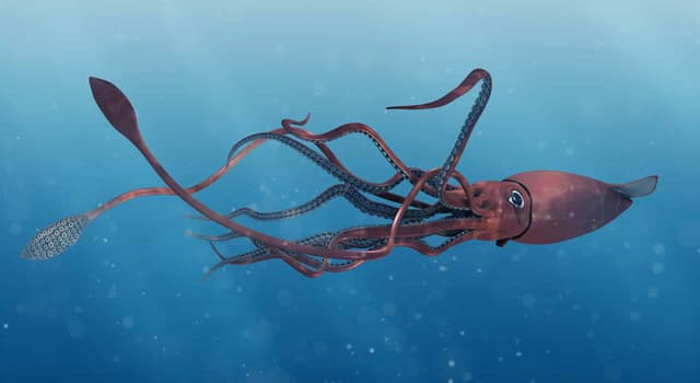 Nature Trivia Question: In which year was the first video of a live giant squid made?