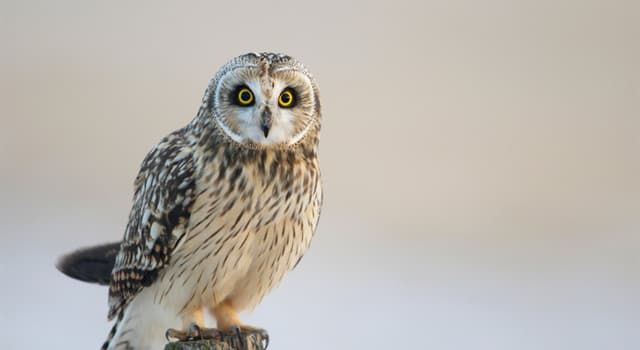 Nature Trivia Question: What do owls feed on?