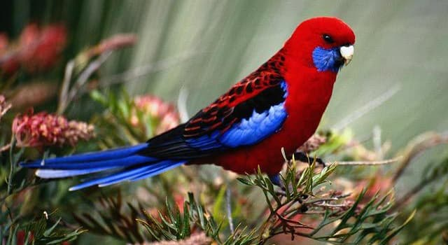 Nature Trivia Question: What is the name of this bird?