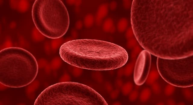 Science Trivia Question: What percentage of the human body weight does blood account for?