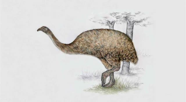 Nature Trivia Question: Where did the extinct moa birds live?