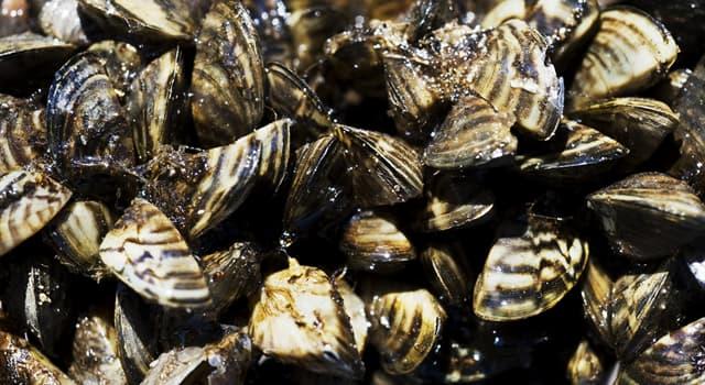 Nature Trivia Question: Where were Zebra mussels first found in North America?