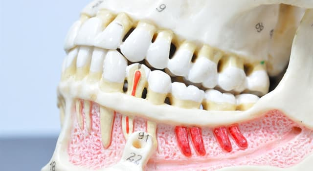 Science Trivia Question: Which of these is another name for a wisdom tooth?