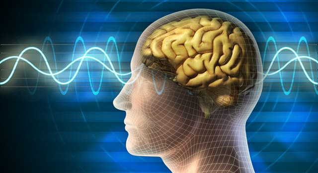 Science Trivia Question: Which type of physician treats brain seizures or epilepsy?