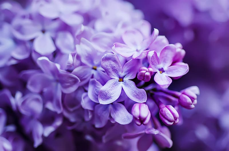 Nature Trivia Question: Which flower is in the picture?