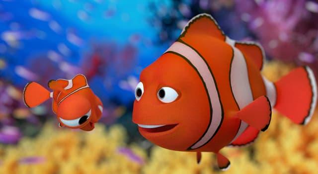 Natur Wissensfrage: Welcher Fisch kann sein Geschlecht wechseln?