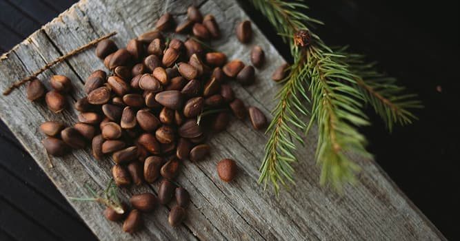 Nature Trivia Question: Which country is the largest producer of pine nuts (Pinus sibirica) in the world?