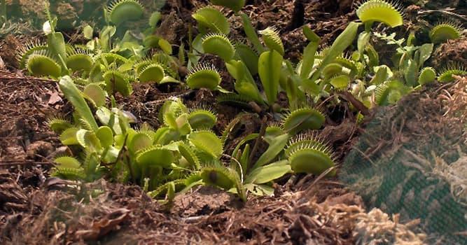 Naturaleza Pregunta Trivia: ¿Cuál es el tipo de esta planta?