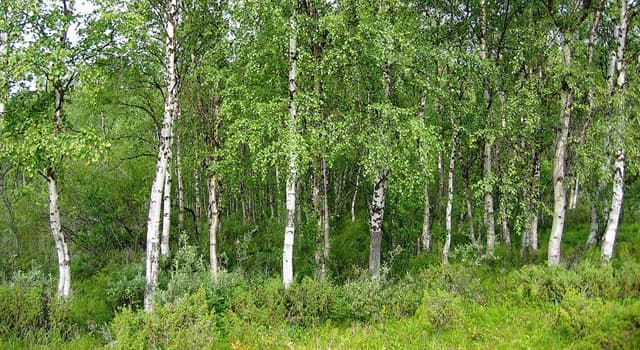 """Culture Trivia Question: """"One could do worse than be a swinger of birches"""" was written by which poet?"""
