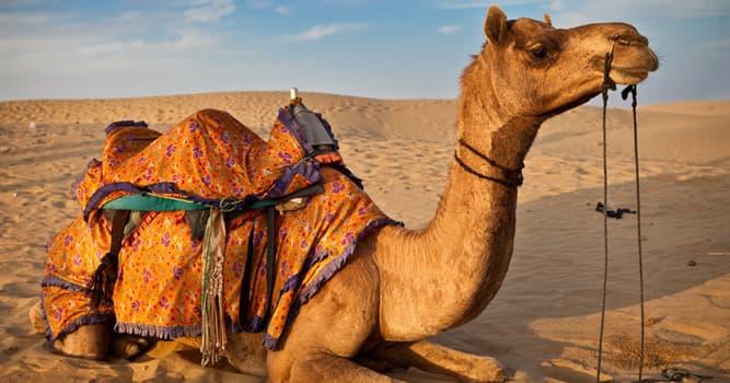 Naturaleza Pregunta Trivia: ¿Cuál de los siguientes animales no es un miembro de la familia de los camellos?