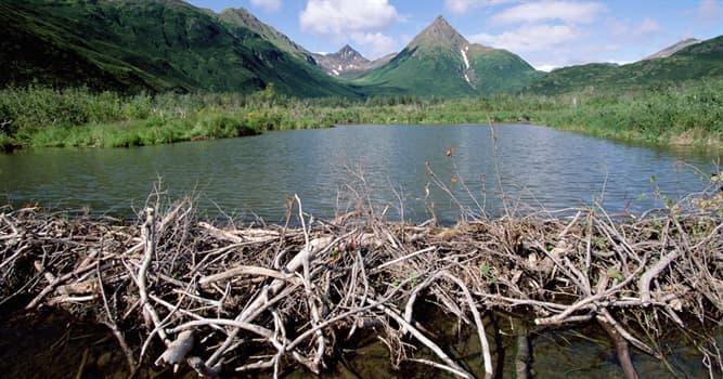 Naturaleza Pregunta Trivia: ¿Cuál de estos animales construye presas?