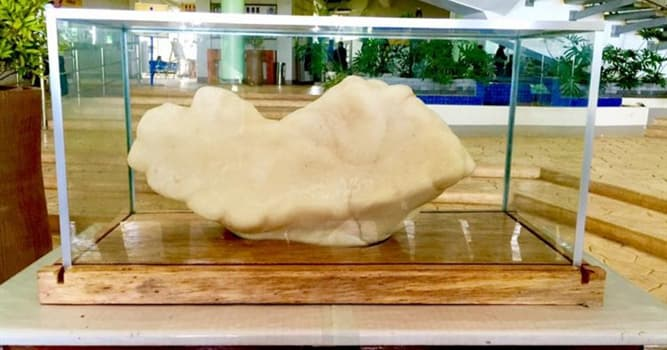 Naturaleza Pregunta Trivia: ¿Cuánto pesa la perla más grande del mundo?