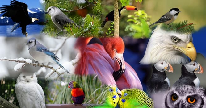 Nature Trivia Question: The oldest confirmed tagged wild bird in the world belongs to which species?