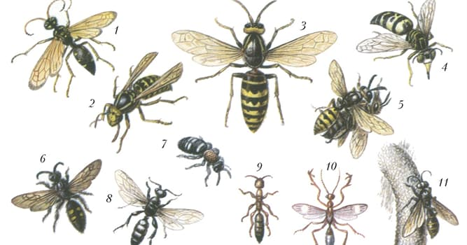 Nature Trivia Question: What are wasp nests made of?