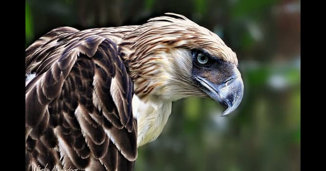 Nature Trivia Question: Where is the monkey-eating eagle native to?