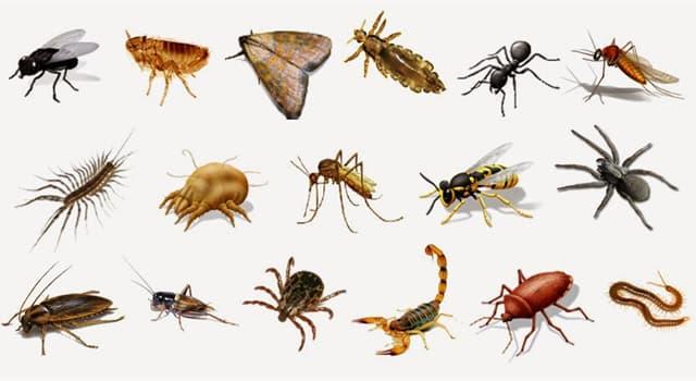 Naturaleza Pregunta Trivia: ¿A qué grupo de artrópodos pertenecen los uropigios también llamados vinagrillos?