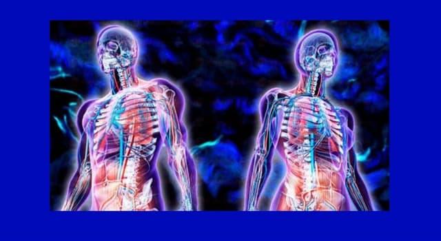 Сiencia Pregunta Trivia: ¿A qué órganos afecta principalmente el síndrome de Axenfeld-Rieger?