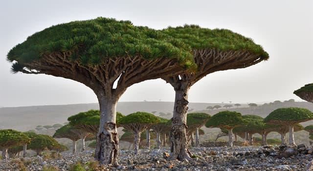 Geografía Pregunta Trivia: ¿A qué país pertenece la famosa isla Socrota?