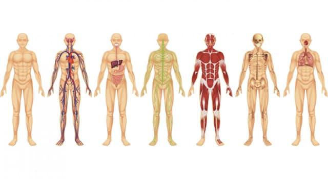 Сiencia Pregunta Trivia: ¿A qué parte del cuerpo humano se lo llama filtrum?