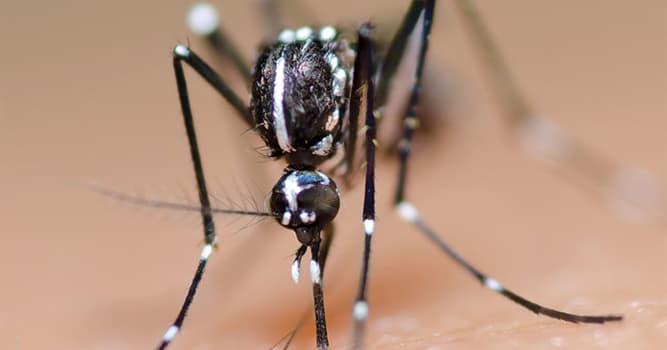 Naturaleza Pregunta Trivia: ¿Cuántas especies de mosquitos hay?