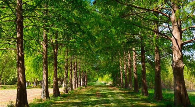 Naturaleza Pregunta Trivia: ¿Cuántos árboles se necesitan para proporcionar suficiente oxígeno para una persona por año?